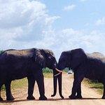 Elephants roadblock Kruger