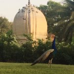 Photo de The Oberoi Rajvilas