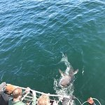 Photo of White Shark Africa