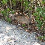 Photo de National Key Deer Refuge