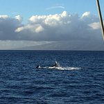 Whale between Maui and Lanai