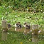 Little ducklings.
