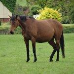 Horse in a nearby field.