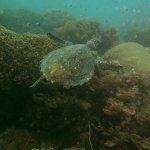 Foto de Divine Diving, Yoga & Dive Center