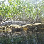 Alligator sunning itself