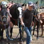 Gentle horses