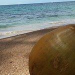 Coconut on Playa Punta Uva