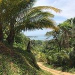 Jungle Top Zipline Adventure Foto