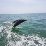 Dolphins jumping by our boat