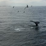 Photo of Dolphin Fleet Whale Watch