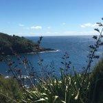 Goat Island Marine Reserve Foto