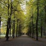 Photo of Boulognerskogen City Park