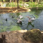 Photo of Parque Zoologico de Lagos