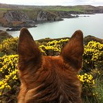 looking over to fishguard