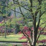 Photo de Japanese Garden