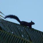 ook de eekhoorntjes voelen zich er thuis