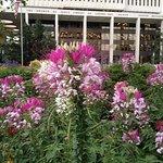 Unusual flowers in summer