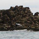large seal