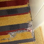 frayed carpet at entrance to room
