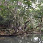 Paysage de mangrove incroyable