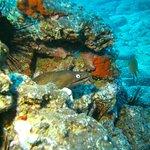 Foto de Deep Blue Diving Base