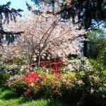 Primavera en su máximo esplendor!!