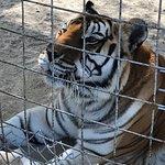 Photo de Octagon Wildlife Sanctuary And Rehabilitation Center