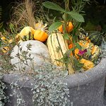 Love the ornamental use of gourds & squashes! Great decorating ideas!