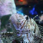 Photo of Underwater World Pattaya