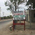 Foto de Mangroves of Dzinitun