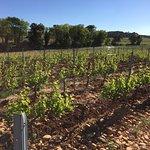 Foto di Avignon Wine Tours