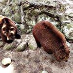 Sehr unternehmungslustige Bären