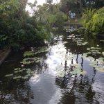 Gorgeous coi pond