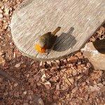 Robin at Harlow Carr 22.04.17