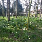 Spring time at the Stained Glass Centre