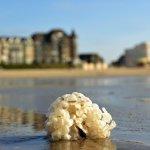 De Panne Beach Foto