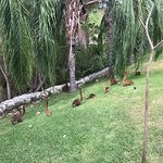Foto de The Grand Bliss Riviera Maya