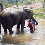 Mae Wang Elephant Camp
