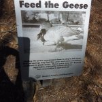 Main part: No goose feeding