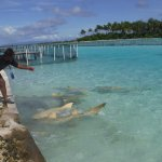 Shark Feeding, you get to swim with these sharks