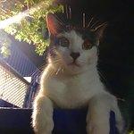 Maria, Nates's special kitty.