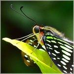 portrait papillon