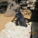 Foto de Safari Park