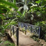 A short trail displays bridges and a variety of plants and trees at every turn.