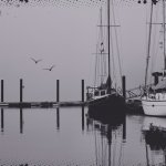 The docks of Page's Resort on a foggy day.