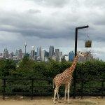 Foto de Taronga Zoo