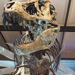 Foto de Museo de Ciencias Naturales