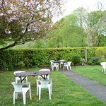 Beer Garden with cherry blossom tree
