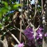 Das Faultier im Garten des Hotels