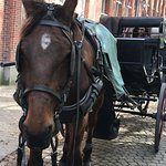Photo of Horse Drawn Carriage Tours